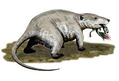 First mammal